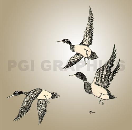 Pen & Ink Ducks